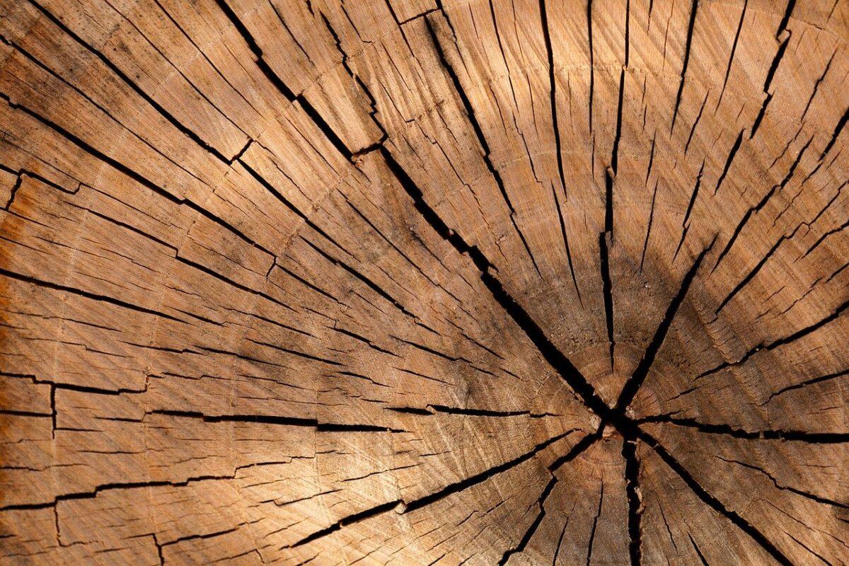 ekologiczna wanna z drewna